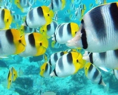 壁纸 动物 海底 海底世界 海洋馆 水族馆 鱼 鱼类 497_401