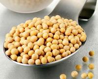 来看能抵抗8种癌症的食物--黄豆