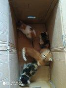 免费赠送自己家里饲养猫生下的小